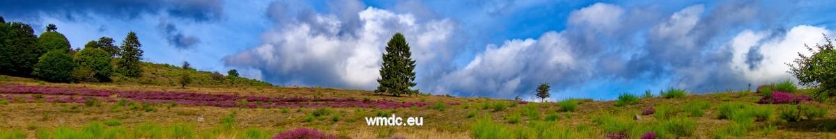 WMDC data management consulting